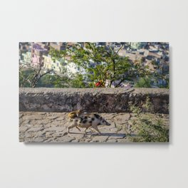 A Monkey Riding a Pig in India Metal Print