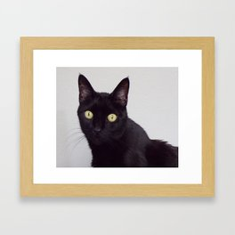 Pretty Kitty, Black Cat With Huge Green Eyes, Halloween Cat Framed Art Print