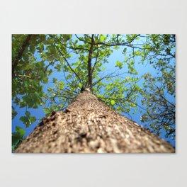 Reach High!! Canvas Print