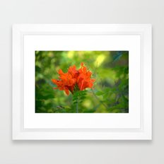 Exotic Ginger Flower Bignone 9125 Framed Art Print