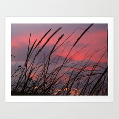 Sunset through the Reeds Art Print