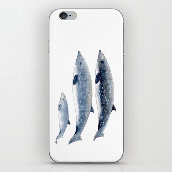 Blainville´s beaked whale by chloeyzoard