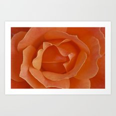Tangerine Rose Art Print