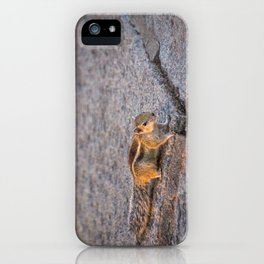 Indian palm squirrel iPhone Case