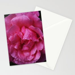 macro water drops on pink rose Stationery Cards
