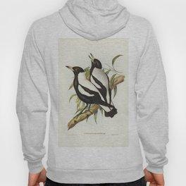 Tasmanian Crow-Shrike (Gymnorhina organicum) illustrated by Elizabeth Gould (1804-1841) for John Gou Hoody