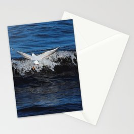 Black Headed Gull Donegal Stationery Cards