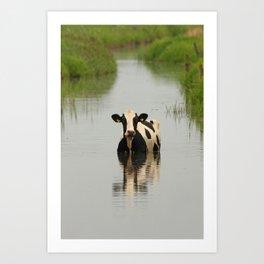 Cow in a channel Art Print