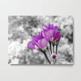 Fuchsia fLOWERS Pop Of Color Metal Print