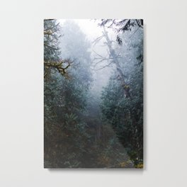 Olympic National Forest Metal Print