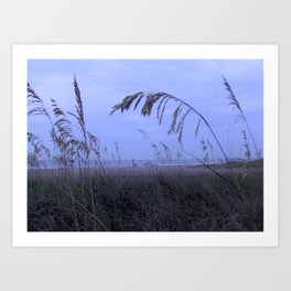 Sea Oats at Fernandina Beach FL Art Print