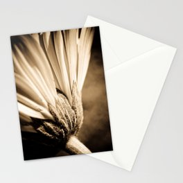Sepia Gerbera Stationery Cards