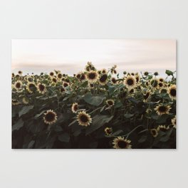 In The Sunflower Field Canvas Print