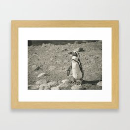 Black and White African Penguin - Photography #Society6 Framed Art Print