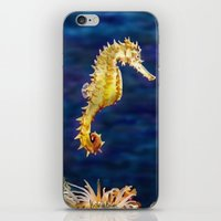 sea horse iPhone & iPod Skins featuring Sea horse by Michelle Behar