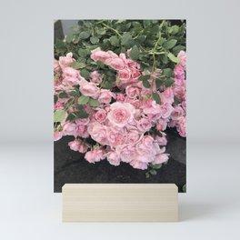 Soft Pink Roses Mini Art Print