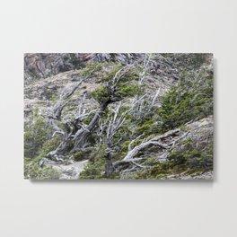 Windswept Woodland Metal Print