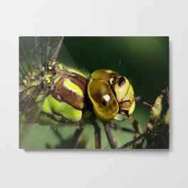 dragonfly head Metal Print