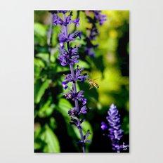 Purple Pollination Canvas Print