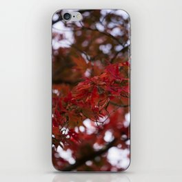 Autumn Red iPhone Skin