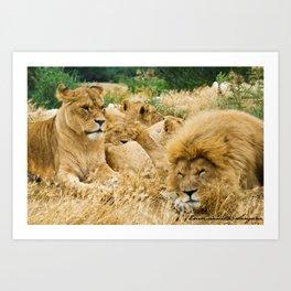 Lion family Art Print