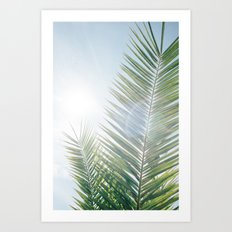 Another palm tree on another sunny morning Art Print