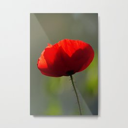 Red Poppy | Symbol of Remembrance day | Nature Photography Metal Print
