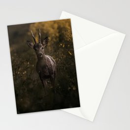 Deer in the wilderness Stationery Cards