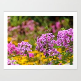 Pretty Pink Flowers in the Golden Garden Art Print