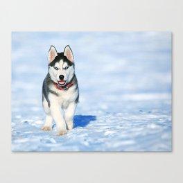 Siberian Husky pup Canvas Print