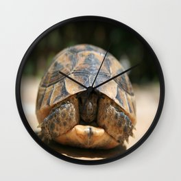 Young Spur Thighed Tortoise Looking Out of Its Shell Wall Clock