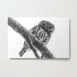 Pearl-Spotted Owlet Metal Print