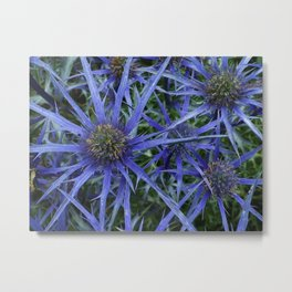 BLUE SEA HOLLY Metal Print
