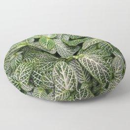 Fittonia / Mosaic Plant / Nerve Plant Floor Pillow