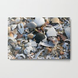 Shell Menagerie Metal Print
