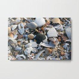 Shell Menagerie Metal Print