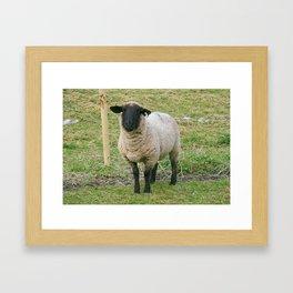 Hore Abby, Ireland ~ Mr.Sheep Framed Art Print