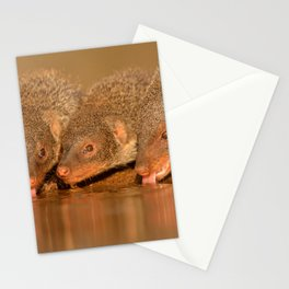 Thirsty mongoose Stationery Cards
