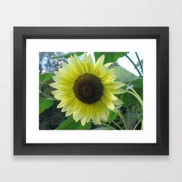 pic 041 Framed Art Print