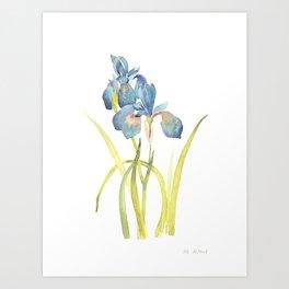 Watercolor flower Iris Siberica Art Print