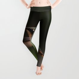 BROWN AND GREEN HUMMINGBIRD FLYING MACRO PHOTOGRAPHY Leggings