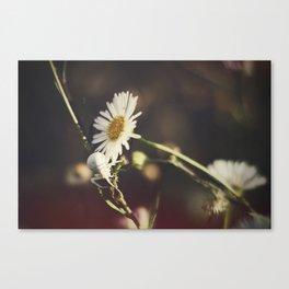 White Flower Spider Canvas Print