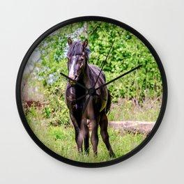 Dark bay horse Wall Clock
