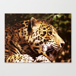 Jaguar profile 2 Canvas Print