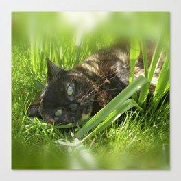 wild cat III Canvas Print