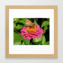 Light moth landing Framed Art Print