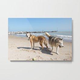 helens dogs  Metal Print