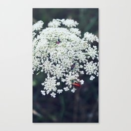 Bug Spotting Canvas Print
