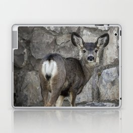 Young Mule Deer Laptop & iPad Skin