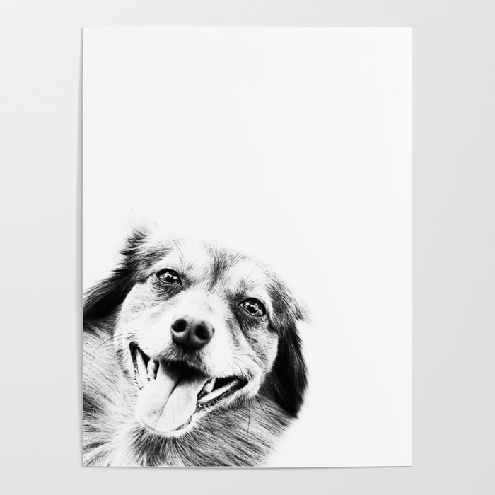 Dog peeking Black & White Poster